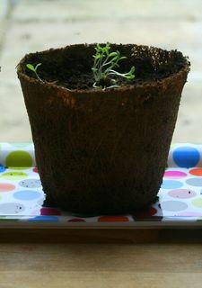 Seedlings 008